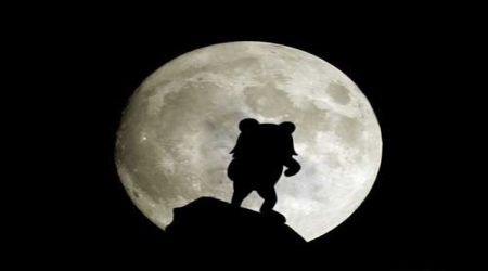 Pedobear moonlight silhouette