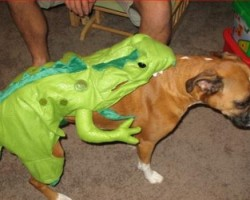 Dog costume rear