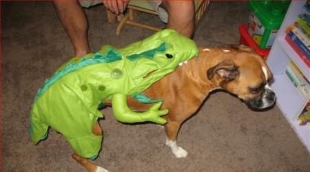 Dog costume rear